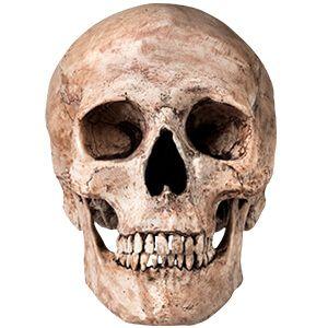 teschio umano con denti